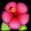 :hibiscus:
